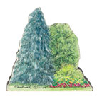 fir-tree-grouping.jpg Art Card