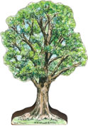 large-white-elm-tree.jpg Art Card